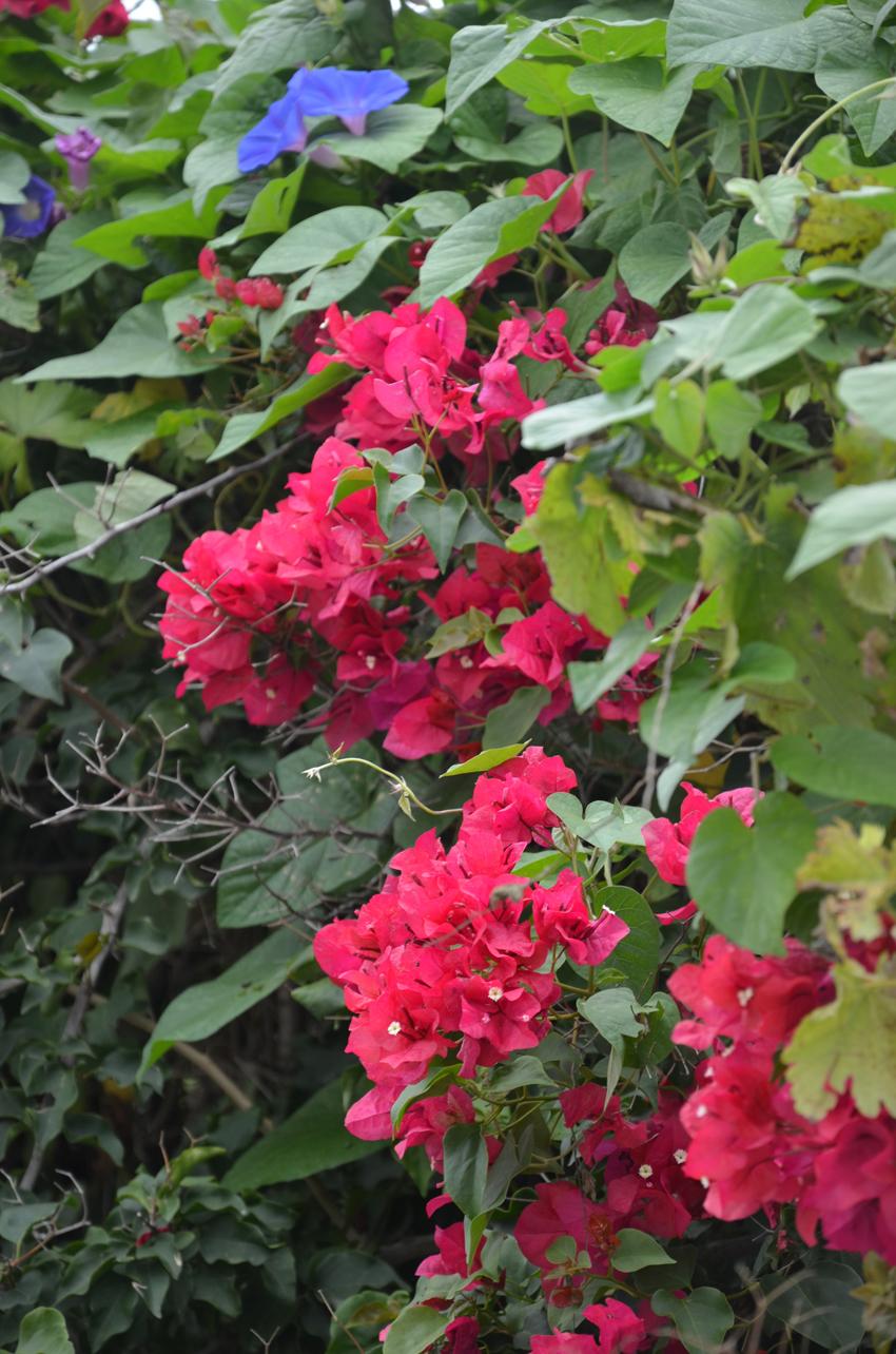 flowers-ibiza