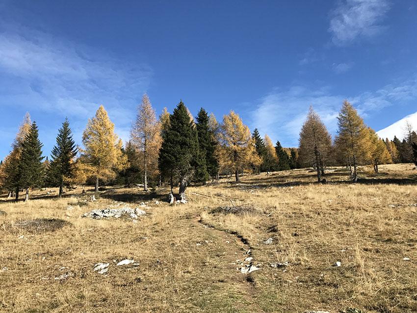 paesaggio_montano_autunno_alberi_foglie